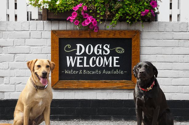 Dog Friendly Places To Eat In Sheffield