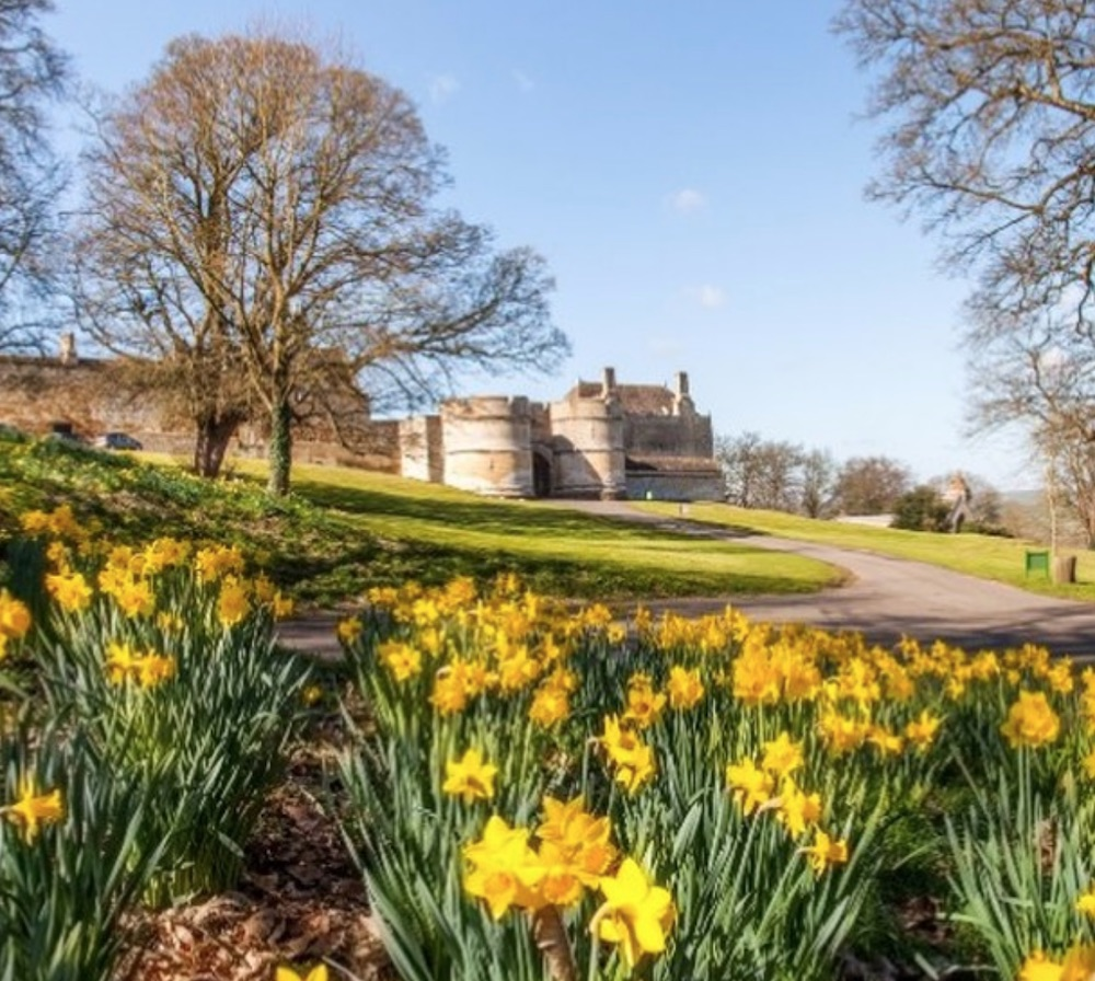 Daffodils at Rockingham Castle